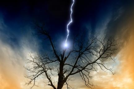 【雷擊保命要件】破除迷思!打雷不能躲樹下!