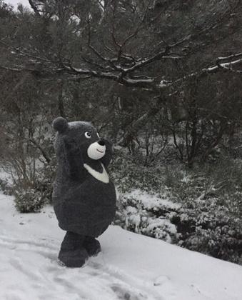 熊讚不睡覺 陽明山賞雪/圖片來源:臺北市觀光傳播局