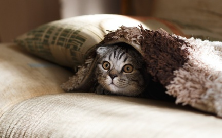 貓奴快點!5個愛貓人必知的日常問題!