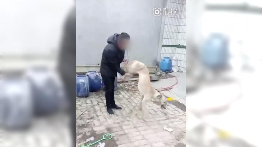 圖/翻攝自《梨視頻》 渣男賽狗賭輸 竟將狗活活摔死嗆:沒用就是要吃掉
