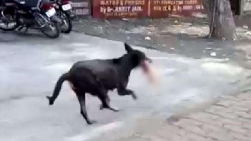 圖/Twitter ANI 流浪狗叼走嬰屍餵小狗 樹林發現殘肢
