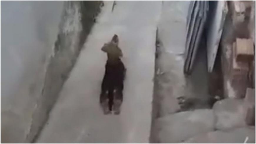 圖/擷取自影片,下同。 眼淚還我!癱瘓狗拖後腿緩移動 下秒…全場噴笑