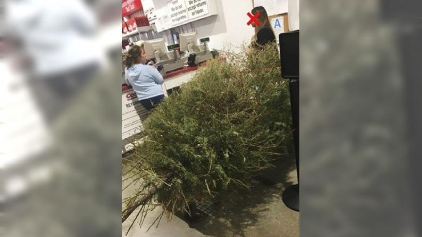 翻攝/boredpanda 過10天!搬耶誕樹好市多退貨 奧客硬拗:它死了