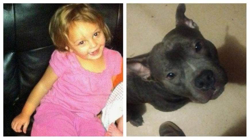 圖/翻攝自Jason Dodge 臉書 才養5天突發狂!3歲女童遭比特犬啃頭慘死