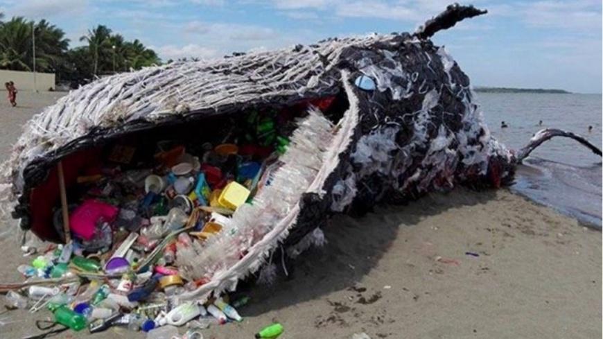 圖/Discover Ocean Instagram 震撼…鯨魚「擱淺」倒岸邊 嘴裡全是垃圾