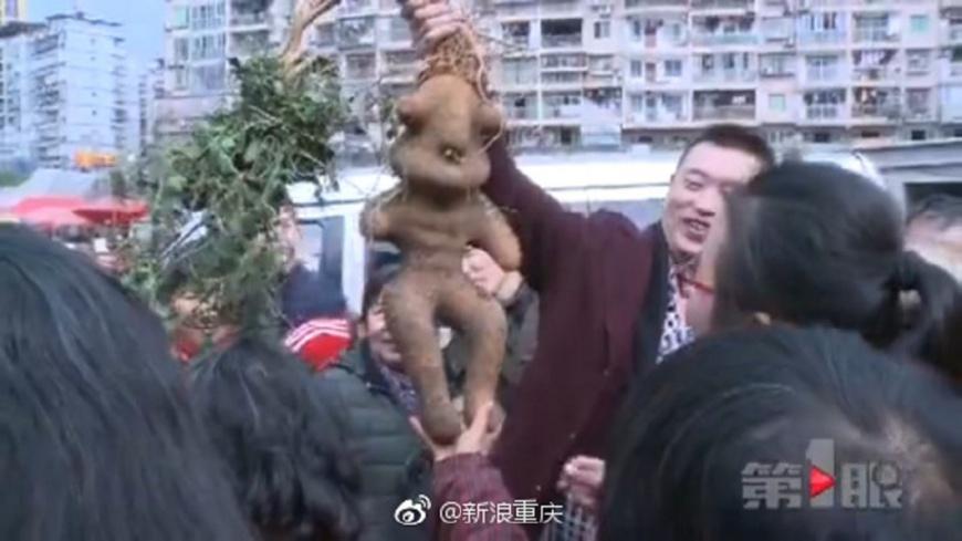 圖/翻攝自 新浪網 炫耀挖到「人形何首烏」 被中醫打臉:那是地瓜