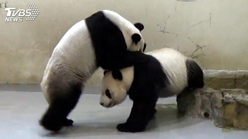 圖/中央社 贈台貓熊變「個人建議」 潘恆旭遭打臉回應了!
