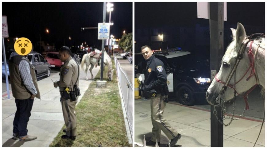 美國加州一名男子騎著白馬上高速公路,結果遭警方攔下,經酒測之後還涉及酒駕被逮。(圖/翻攝自推特) 騎白馬在高速公路狂飆 醉男「酒駕」被警逮