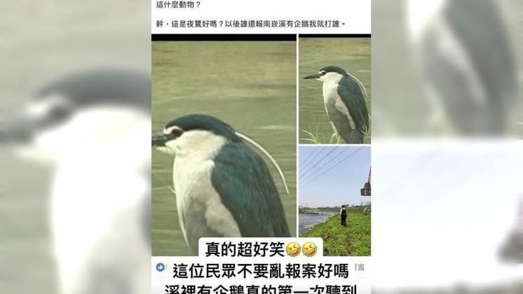 夜鷺遭民眾誤認為企鵝,讓警察好氣又好笑。圖/取自TPC台灣鸚鵡聯盟 傻眼!民報案南崁有企鵝 警到場傻眼:這叫夜鷺