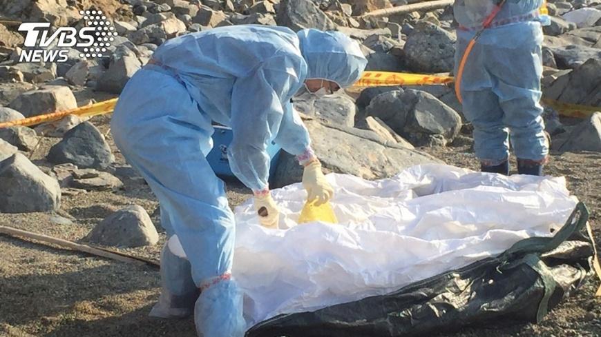 圖/防檢局 馬祖無人島死豬 確認驗出「非洲豬瘟」病毒