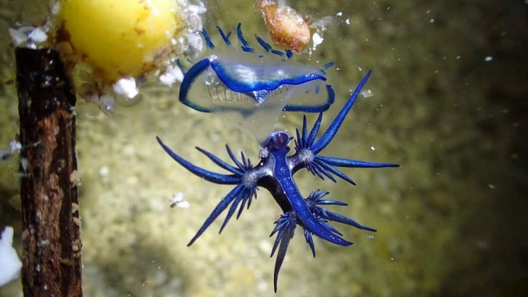 海神。圖/「藍洞潛水Blue Hole Dive Center」授權提供。