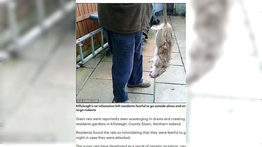 超級大老鼠去年就出沒倫敦。圖/翻攝自dailymail