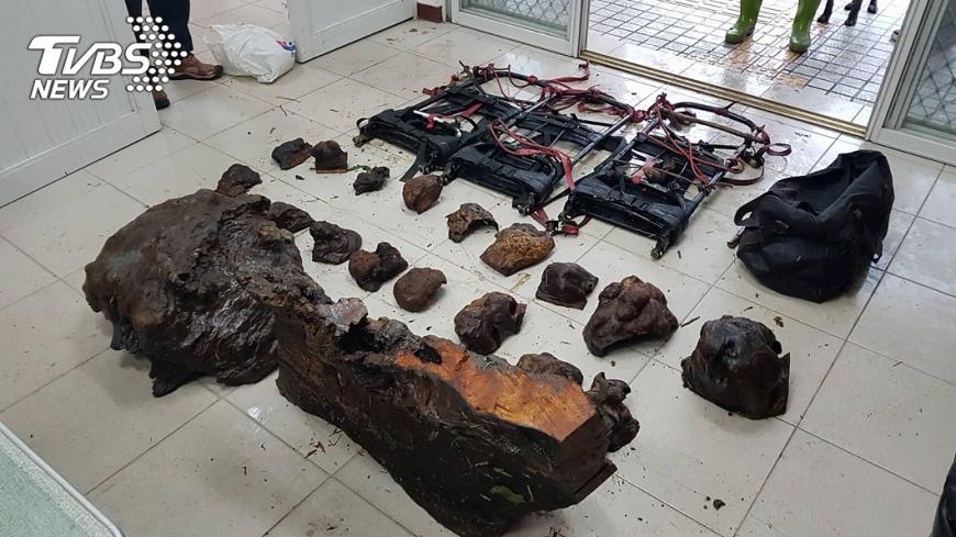 南投林管處逮獲山老鼠。圖/中央社 颱風天照偷 南投林管處緝獲山老鼠
