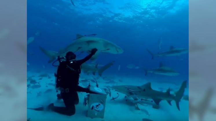 圖/翻攝自 Mark Rober YouTube 電影是騙人的?! 實驗:鯊魚對人血沒興趣