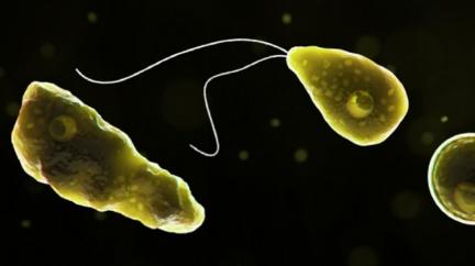 美國佛州驚現恐怖「食腦蟲」 143人僅4人倖存超致命