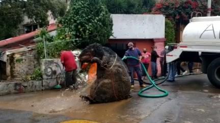 比人還高!下水道驚現「巨型老鼠」驚悚模樣嚇壞民眾