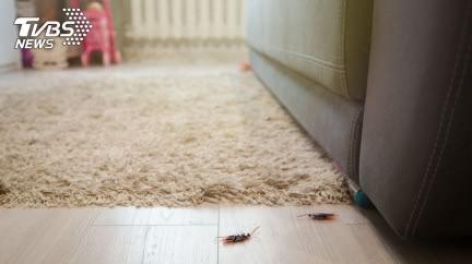 比蟑螂藥強!9種「味道」放家中 小強逃之夭夭
