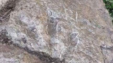 5歲童上山突喊「有恐龍腳印!」 專家驚:屬白堊紀早期