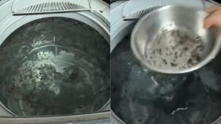 洗衣機內漂滿「黑髮菜」 內行解答:1種粉別再加!