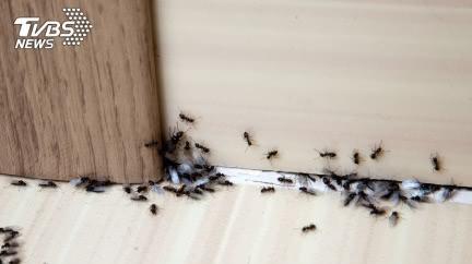 暖心幫螞蟻「辦流水席」 開6桌無限供應結局催淚