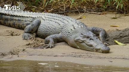 爬水管渡河慘遭鱷魚襲擊 男遭猛啃撕咬「只剩上半身」