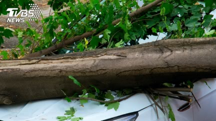 驚悚巧合?尪開車撞樹亡 1個月後妻兒撞同棵樹慘死