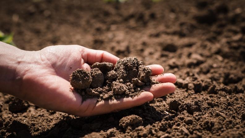 對付抗藥性細菌 土壤中有大發現