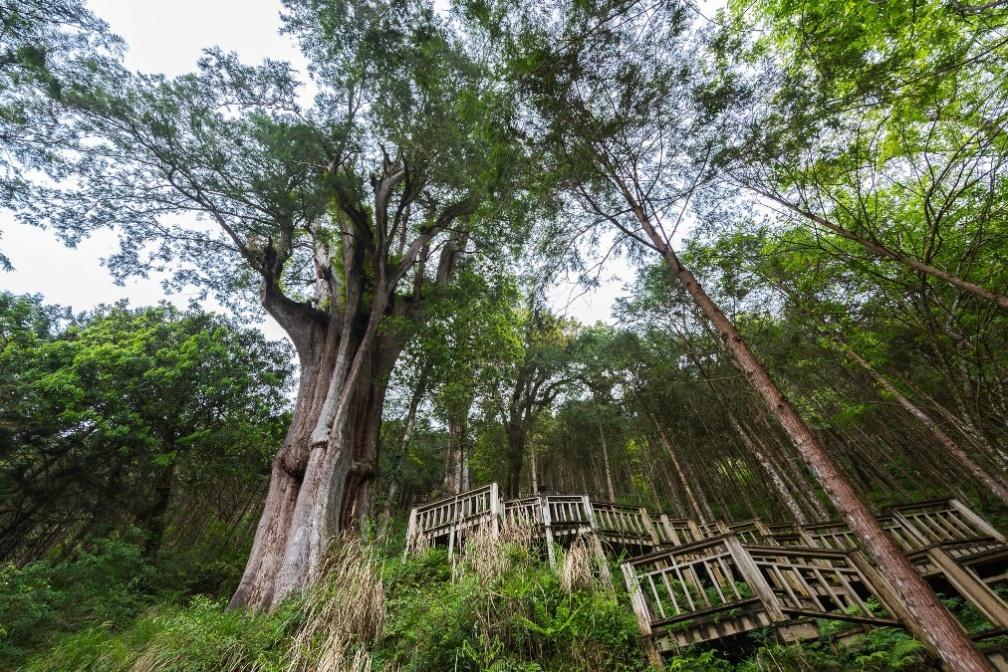 圖說1.亞洲最大神木聚落-神木園,擁有世界重要林木資源,圖為神木司馬遷。.jpg