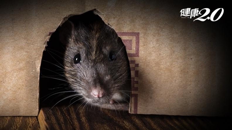 老鼠的排泄物竟會傳染4大病,嚴重恐致命!專家教你如何處理