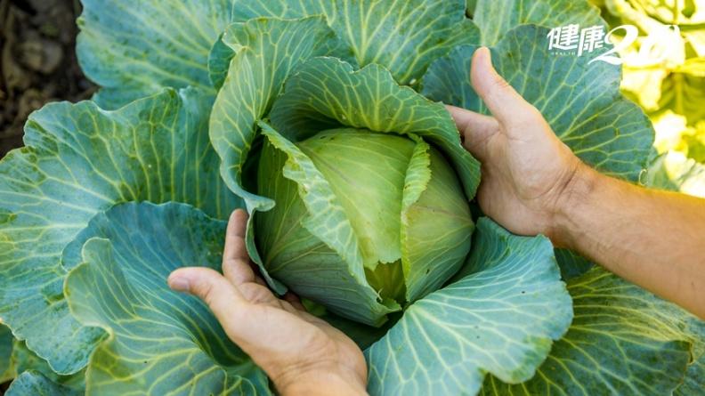 高麗菜能防癌、顧胃、補骨 但要這樣煮才有效