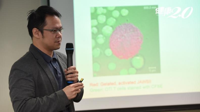凍結細胞青春方法找到了!中研院研發「果凍細胞」技術,免疫治療再升級