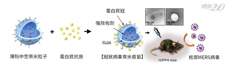 MERS有解藥了!中研院研發「冠狀病毒奈米疫苗」,有效毒殺病毒