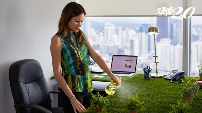 最簡單減壓方法!室內擺綠色植物 盯40秒壓力瞬間消失