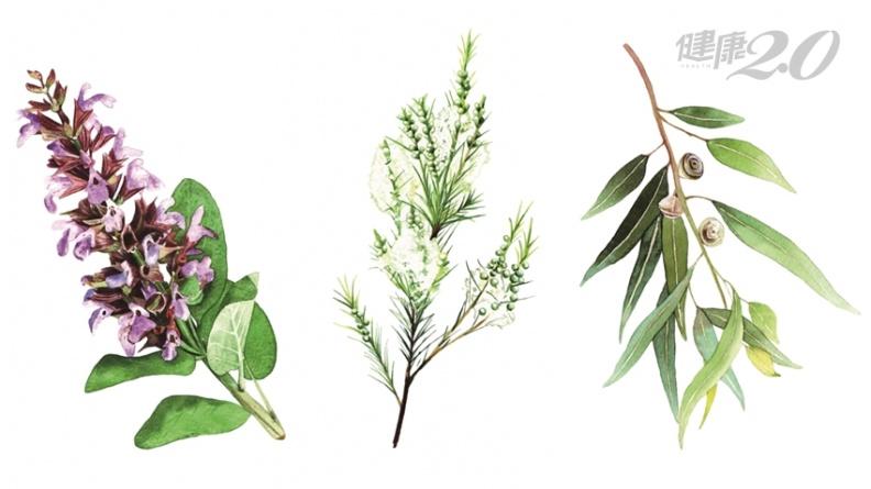 3種婦科消炎植物!改善陰道發炎、化解組織沾黏、舒緩更年期