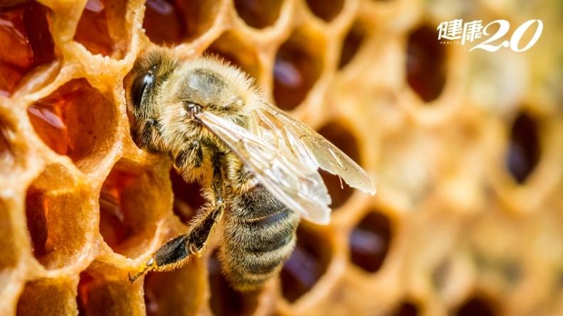研究:蜂膠中萃取物可治攝護腺癌 預防雄性禿