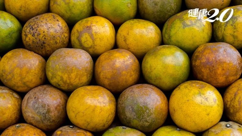 多數人看了不會買的「火燒柑」 竟是少農藥又好吃的極品柑橘?