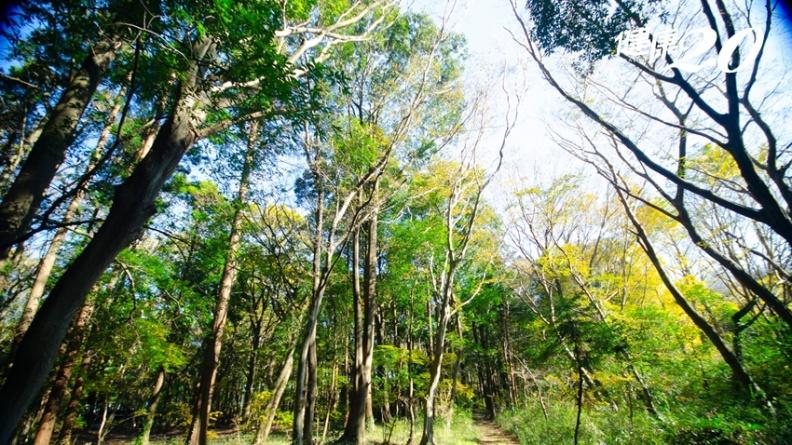 壓力越大越易生病!「森林浴」11種神奇效果 抗癌、護心、減重、降血糖