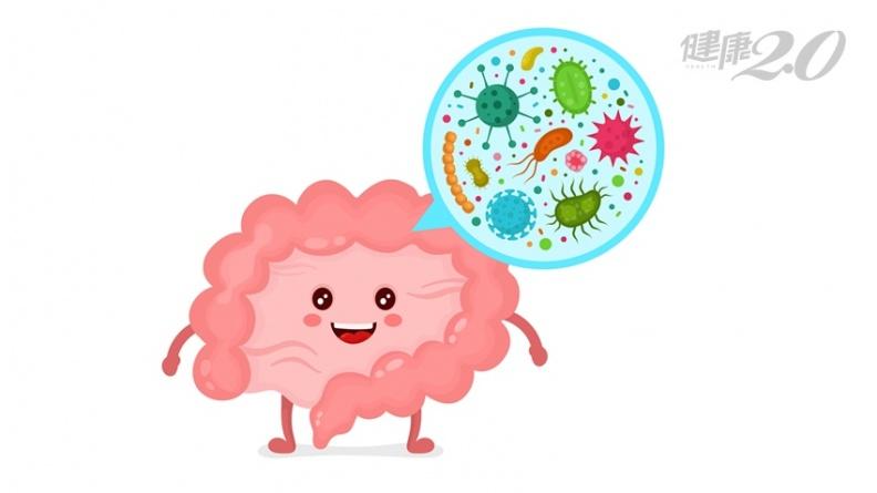 過年飲食大失控 益生菌吃對時機減輕負擔