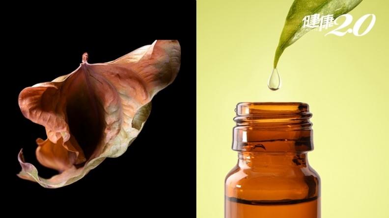 更年期陰道乾澀又敏感?芳療專家公開「女性護理油」配方 保養私密處防感染