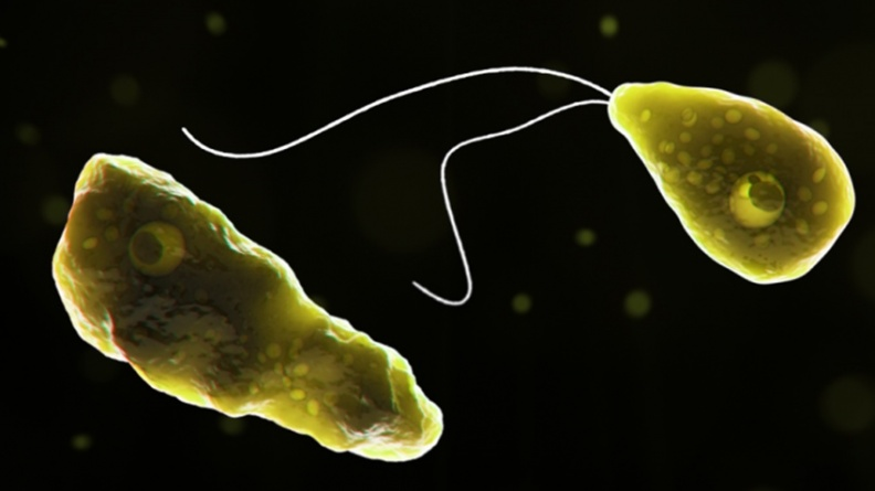 美國驚見百餘人感染食腦蟲 台灣也有案例,專家警告別游湖水!