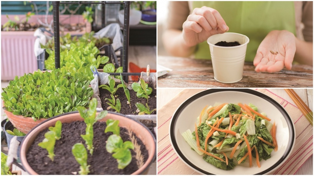 陽台就是菜園!5款「常備蔬菜」居家種植撇步,辛香料、高營養葉菜輕鬆收成