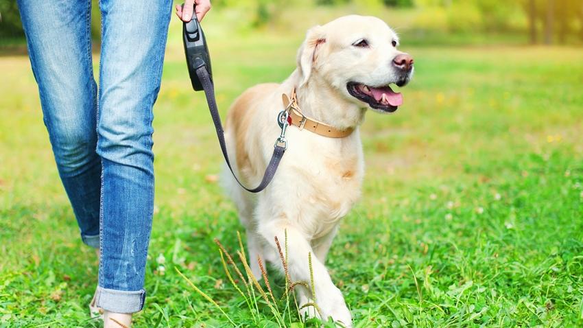 科學證明:養狗也能降血壓、心臟好!