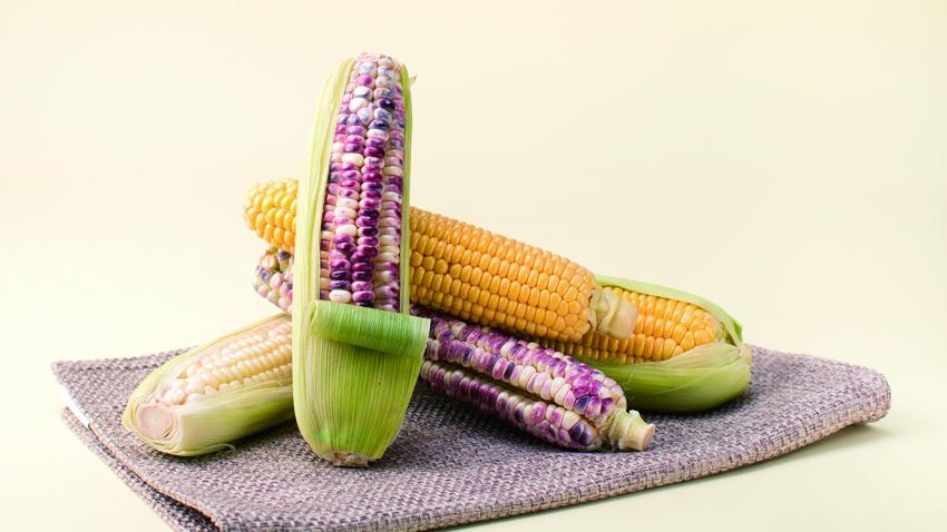 玉米全身都是寶 整腸護眼降血壓