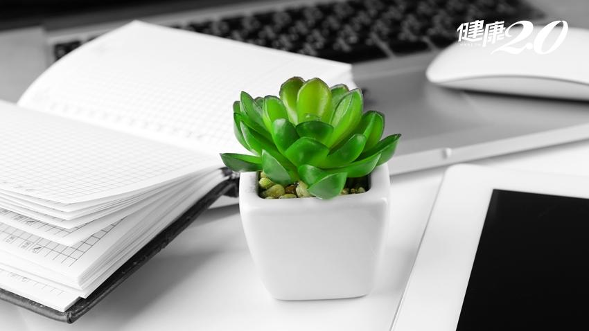 綠色力量!研究證實辦公室擺植物有這個好處……