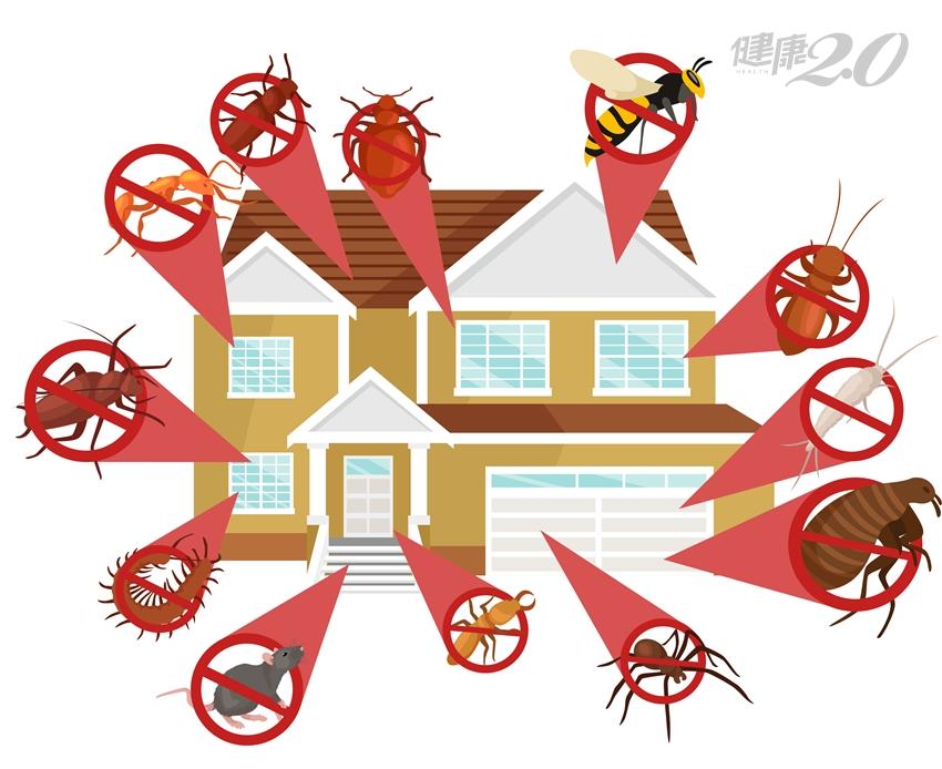 「滅蟲幫手」大評比:你家最適合哪一種?