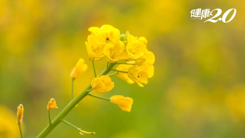 這朵花很厲害!抗老防癌又護眼,效果讓人驚豔