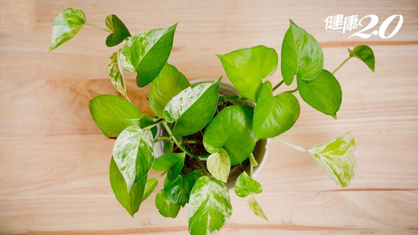 NASA研究:這3種植物最能淨化室內空氣,連工作效率都提高