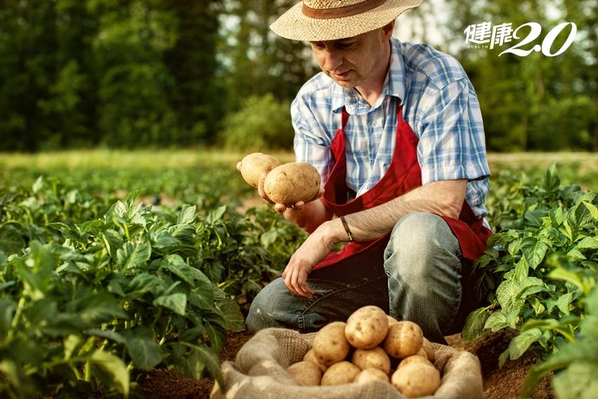 稻米、地瓜、馬鈴薯…最適合國人的優質澱粉竟是它勝出!