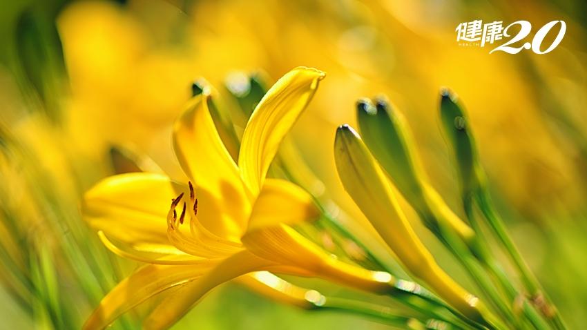 養生多吃花!「金針花」抗氧化又護眼 達人這樣吃