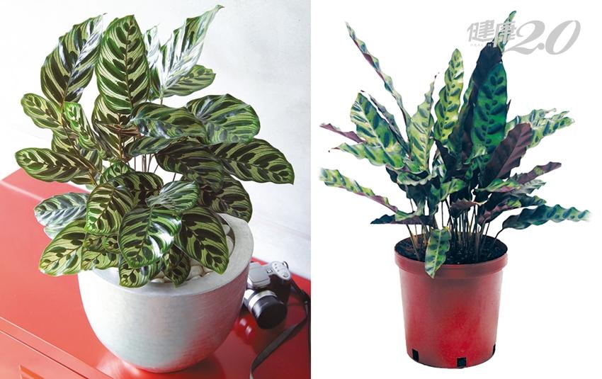 它們是天然的空氣清淨機!居家盆栽怎麼選、怎麼擺最有效?